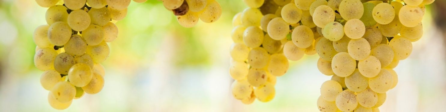 Buy Natural Wine Online
